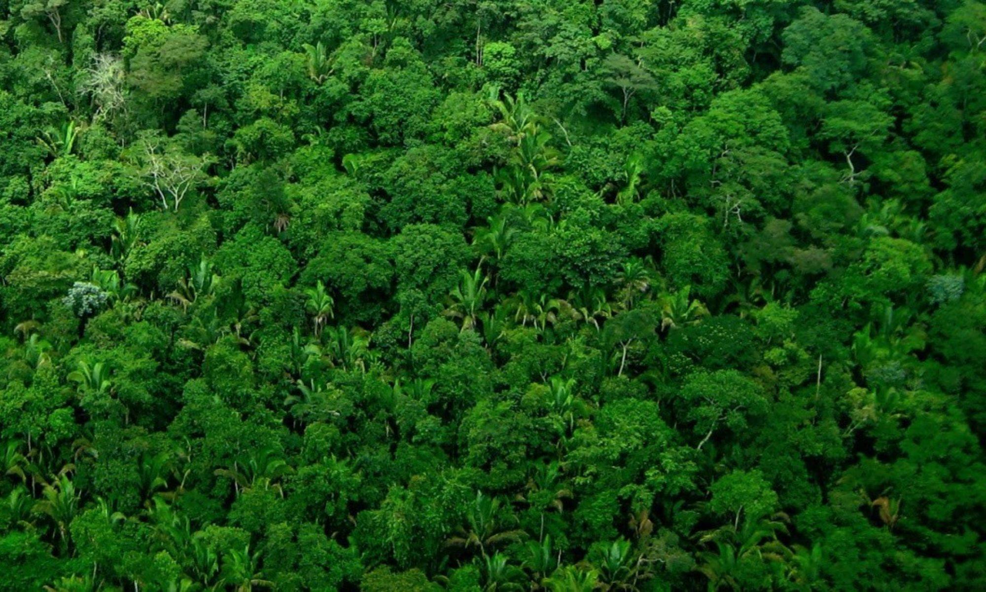 Biodiversidade, Dados e Metadados